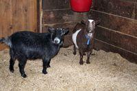 Farm Day 2007 - Windrush Farm (5)